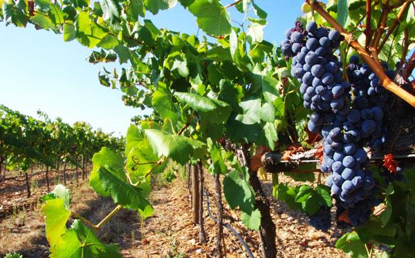 marques de vin colloque Bordeaux